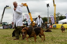 North Bucks Country Show. The Farmers Bloodhounds in the main ring.